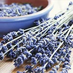 Using lavender aromatherapy benefits and treatment for insomnia sufferers.
